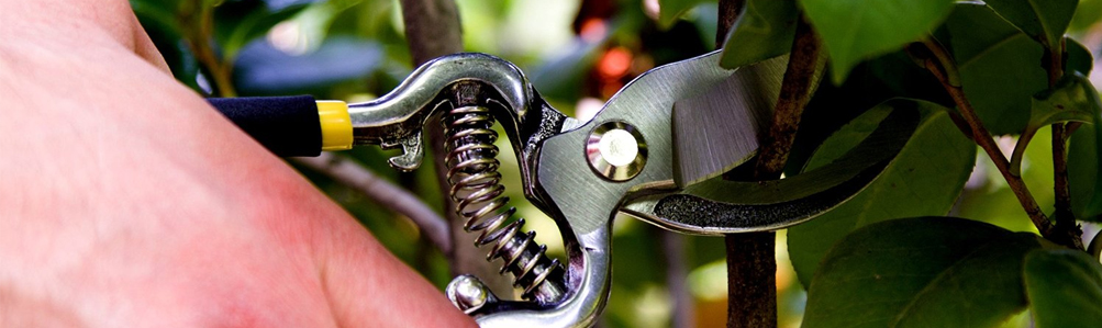 Pruners & Secateurs