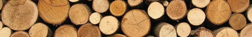 Trees & Logs